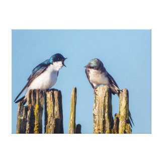 Male and female Tree Swallow Canvas Print