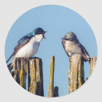 Male and female Tree Swallow Classic Round Sticker