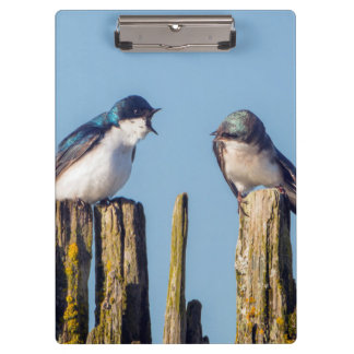 Male and female Tree Swallow Clipboard