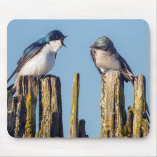 Male and female Tree Swallow Mouse Pad