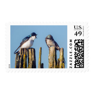Male and female Tree Swallow Postage Stamp