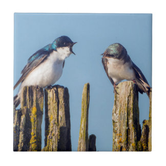 Male and female Tree Swallow Tile