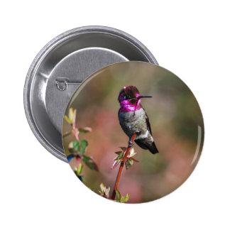 Male Anna's Hummingbird Pinback Buttons