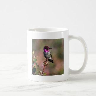 Male Anna's Hummingbird Mug