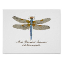 Male Bleached Skimmer Dragonfly Poster