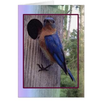 Male Bluebird Card