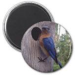 Male Bluebird Magnet
