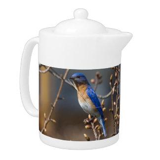 Male Bluebird Nesting Teapot