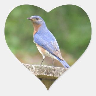 Male Bluebird Watching Over Mate Heart Sticker