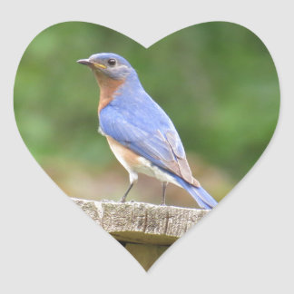 Male Bluebird Watching Over Mate Heart Stickers