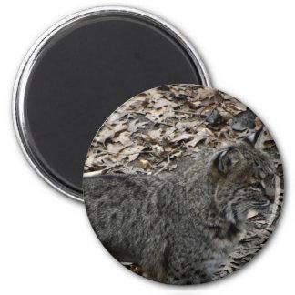 Male Bobcat Refrigerator Magnets