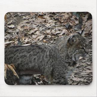 Male Bobcat Mouse Pad