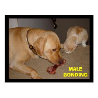 Male Bonding Post Card