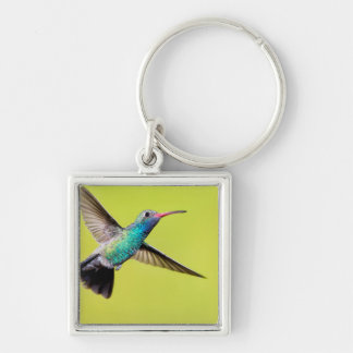 Male broad-billed hummingbird in flight keychain