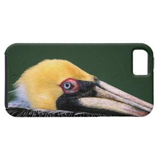 Male Brown Pelican (Pelecanus occidentalis) in iPhone SE/5/5s Case