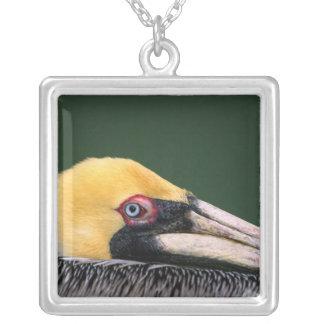 Male Brown Pelican (Pelecanus occidentalis) in Square Pendant Necklace