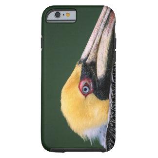 Male Brown Pelican (Pelecanus occidentalis) in Tough iPhone 6 Case