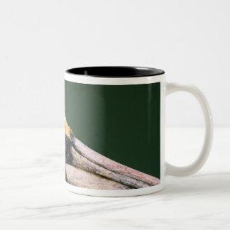 Male Brown Pelican (Pelecanus occidentalis) in Two-Tone Coffee Mug