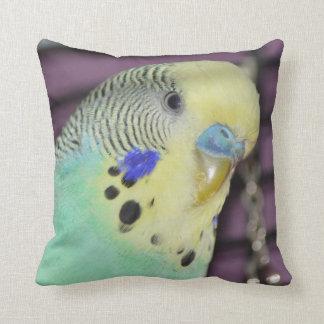 Male Budgie/ Parakeet Pillow