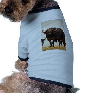 Male buffalo dog tee shirt