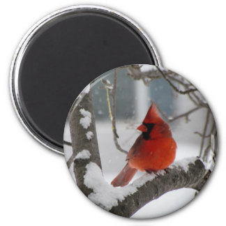 Male Cardinal 2 Inch Round Magnet