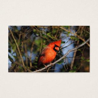 Male Cardinal 4 Business Card
