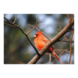 Male Cardinal 5 Card