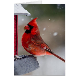 Male Cardinal at feeder Card