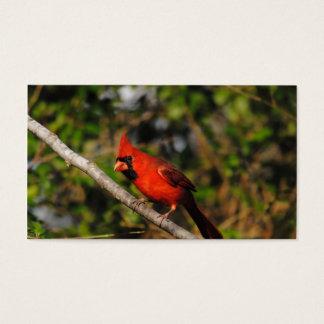 Male Cardinal Business Card