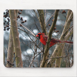 Male Cardinal Concentrating Mouse Pad