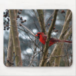 Male Cardinal Concentrating Mouse Pads
