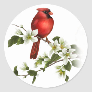 Male Cardinal Dogwood Blossoms Branch Sticker