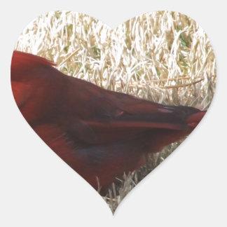 Male cardinal heart sticker