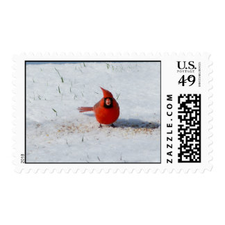 Male Cardinal in the Snow Winter Postage Stamp