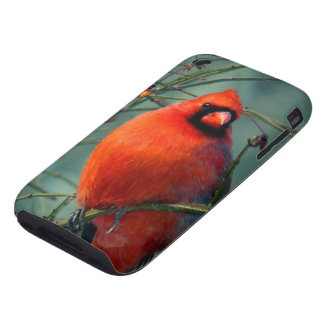 Male Cardinal iPhone 3 Tough Cover