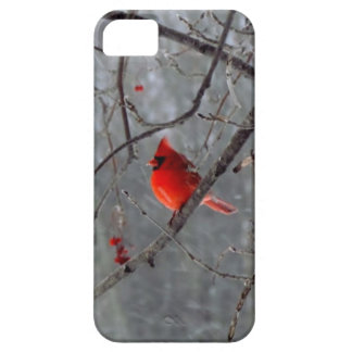 Male cardinal iPhone 5 case