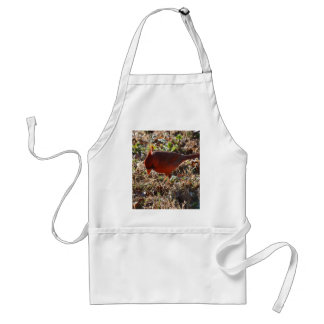 Male Cardinal Looking for Seed Adult Apron