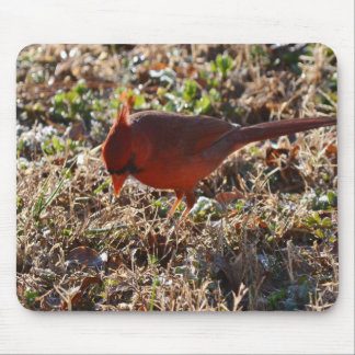 Male Cardinal Looking for Seed Mouse Pads