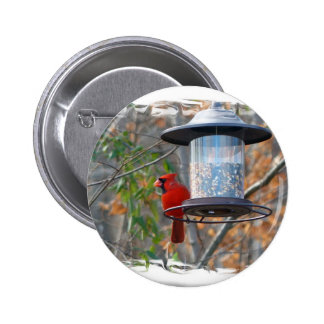Male Cardinal Pinback Button