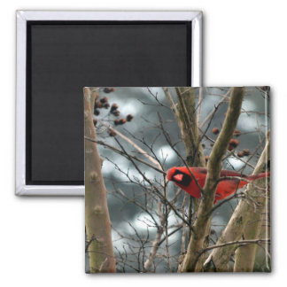 Male Cardinal Playing Funny Magnets