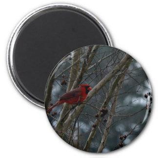 Male Cardinal Posing Pretty Refrigerator Magnets