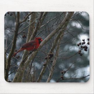Male Cardinal Posing Pretty Mouse Pad