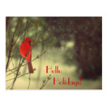Male Cardinal Postcard