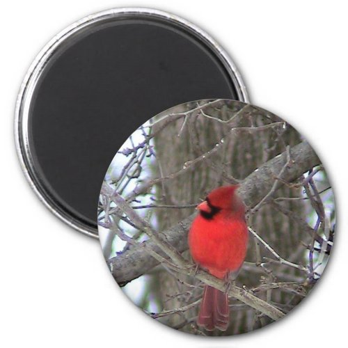 Male Cardinal side view Magnets