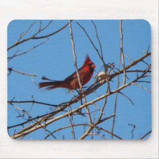 Male Cardinal, Sideview Mouse Pad
