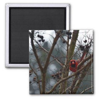 Male Cardinal still Playing Funny Fridge Magnet