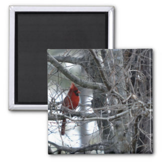Male Cardinal Watch Guard Magnet