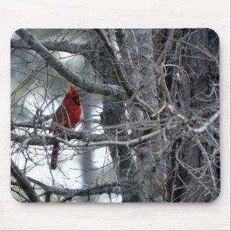 Male Cardinal Watch Guard Mousepad