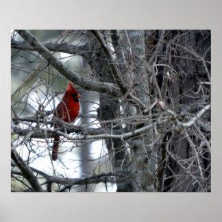 Male Cardinal Watch Guard Print