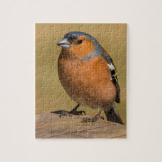 Male Chaffinch Jigsaw Puzzle